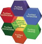 FEB13 Feeding Nucleotides