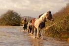 FEB14 News Chelmer Horses
