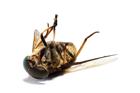 JUN14 Seasonal Pests