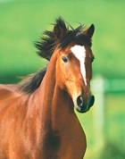 MAY14 MOT for Horses