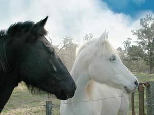 OCT14 Older Horses