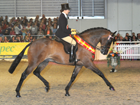 FEB15 News Equifest Supreme champion