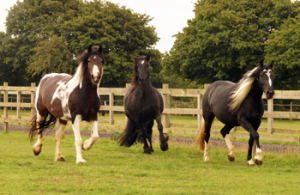 ABH SEP15 News Redwings Strangles