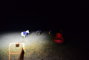 OCT15 News RNLI horse rescue 1